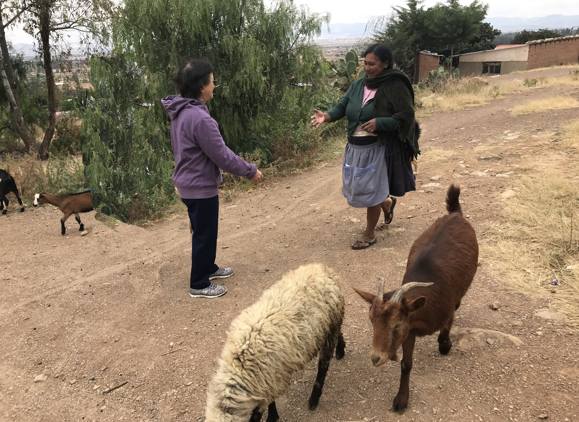 "Meeting our ""good shepherd"" on the road"
